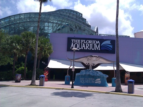 Cruising From Tampa Bay Things To Do During Your Stay
