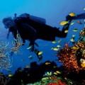 scuba diving cruise