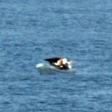 Panamanian fishing vessel stranded at sea