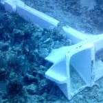 Coral Reef in Cayman Islands Crushed by Cruise Ship Anchor