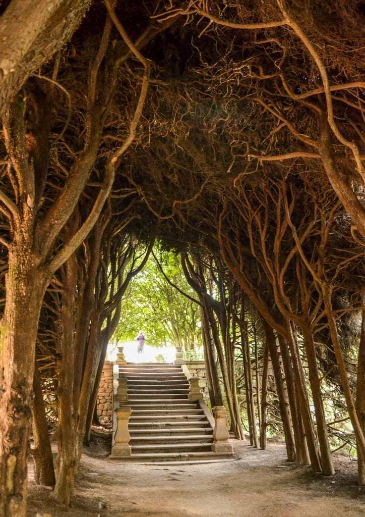 Cedar love forest of Mateus Palace