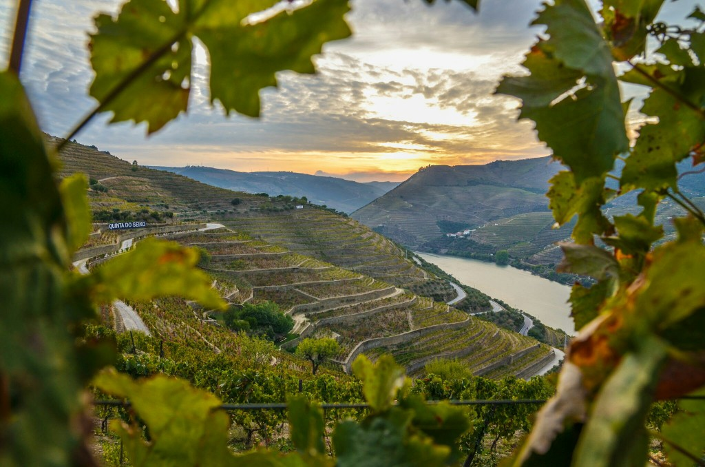 Vineyards fill the terraced hills of Douro Valley