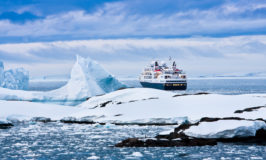 In Search of Polar Bears – 5 Epic Arctic Cruises