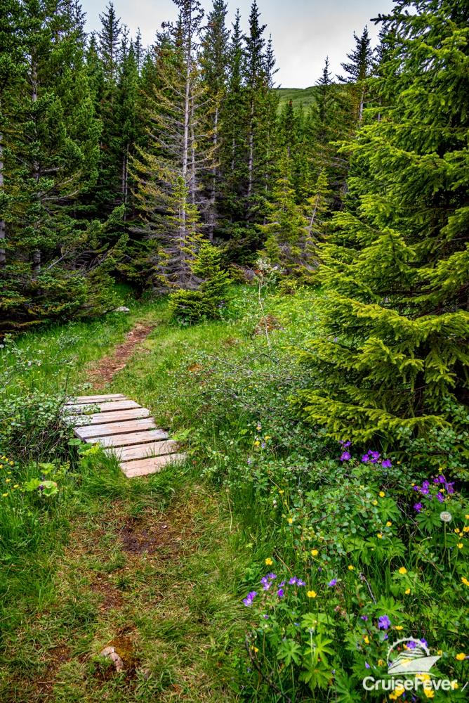 ĺsafjördur forest trail